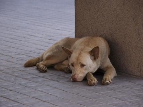マカオ立法会、動物愛護法案を全会一致で可決