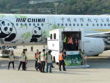 【写真特集】パンダのつがいマカオ到着