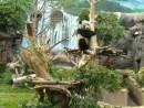 木登りをするメスのシンシン(写真:IACM)