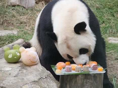 中秋節のマカオ、パンダやクマも特製ムーンケーキ味わう
