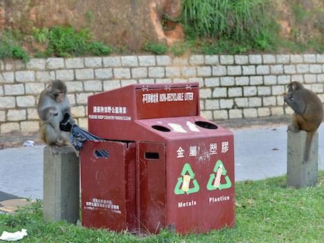 香港、野生サル対策でゴミ箱デザイン改良=大都会の印象も実は豊かな自然残る