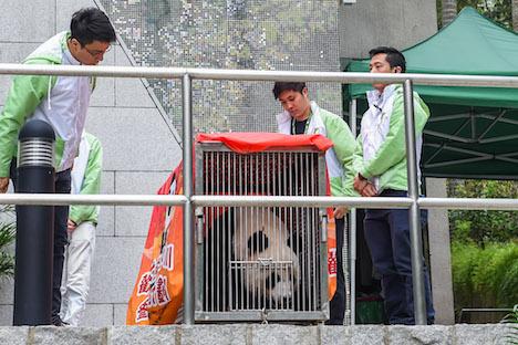 マカオのパンダ1頭が帰国、多くの市民ら沿道で見送り=故郷の中国・四川省で繁殖計画に参加