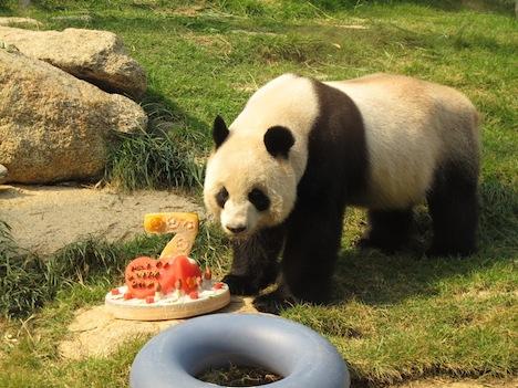 マカオのパンダ、オス1頭が繁殖計画参加のため永久帰国=11月29日に専用機で故郷の中国・四川省へ