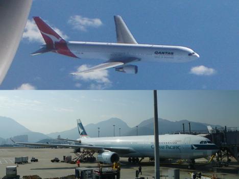 豪州と香港の航空大手がレース犬の輸送を停止=動物愛護の観点
