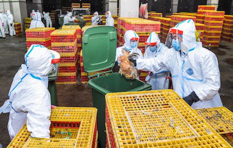 マカオ、H7N9鳥インフルの密接接触者が強制隔離解除求め提訴