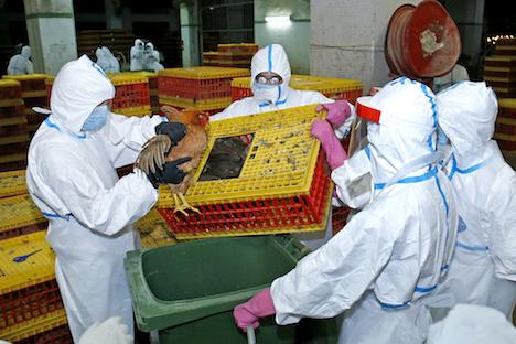マカオ、食用家禽類売買を3日間停止=H7亜型鳥インフル見つかる…9千羽殺処分