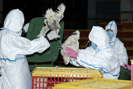 マカオ南粤卸売市場の烏骨鶏からH7亜型鳥インフル見つかる=販売ブース店主がH7N9型鳥インフルウイルスに感染