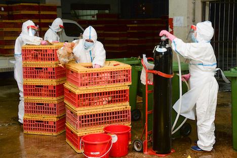 マカオ南粤卸売市場でH7亜型鳥インフル見つかる=食用家禽類売買を3日間停止、1万8千羽殺処分