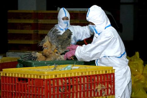 マカオ南粤卸売市場で前週に続きH7亜型鳥インフル見つかる=生きた食用家禽類の売買を3日間停止、全量殺処分