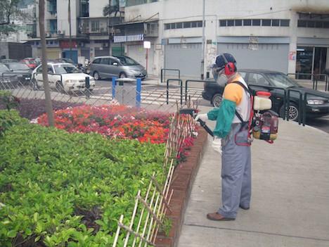 マカオ当局、市内180ヶ所で蚊の駆除を実施…デング熱予防対策