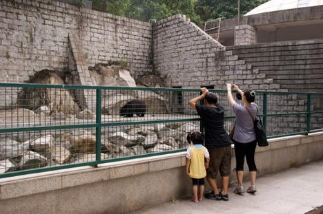 マカオ・二龍頭公園の超高齢ツキノワグマがコロアン島へ引っ越しへ=トンネル工事の影響で