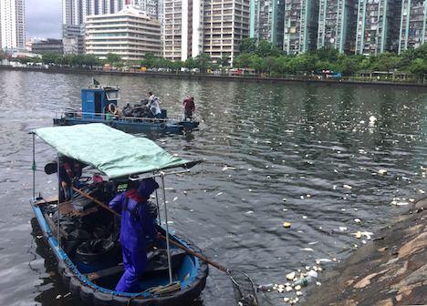 マカオ半島北西部沿岸で魚が大量死…当局が回収及び調査に着手