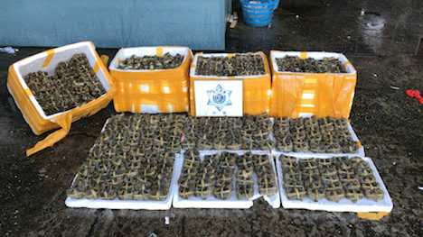 マカオ当局、密輸海産物800kg超押収=上海蟹シーズン到来で検査強化中