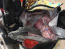マカオ税関が關閘イミグレーション施設の税関検査場で発見した無申告、無検疫の食肉類(写真:澳門海關)
