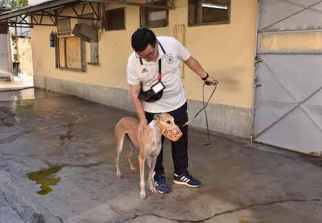 レース犬の健康状態を確認するIACMの職員=2018年7月20日(写真:IACM)